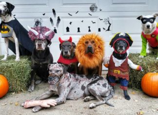 Halloween Pets Costumes - Instagram - cardicatahoulas