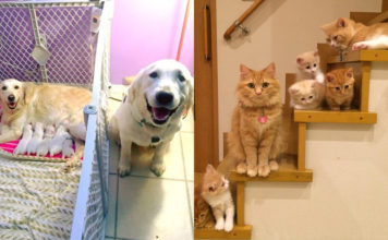 Proud Pet Parents and their Babies