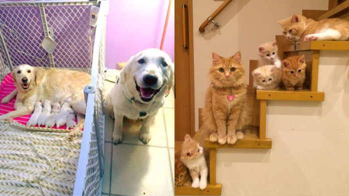 Proud Pet Parents and their Babies